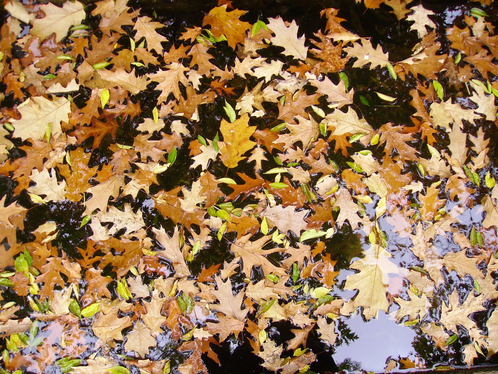 Leaves (Foglie) - Foto di Giulio Concu