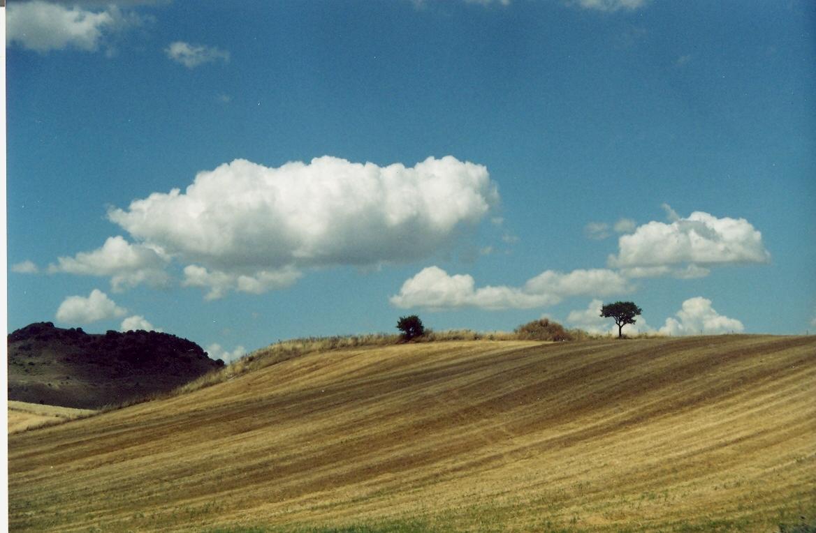 Campo di grano - Dipinto di Giulio Concu