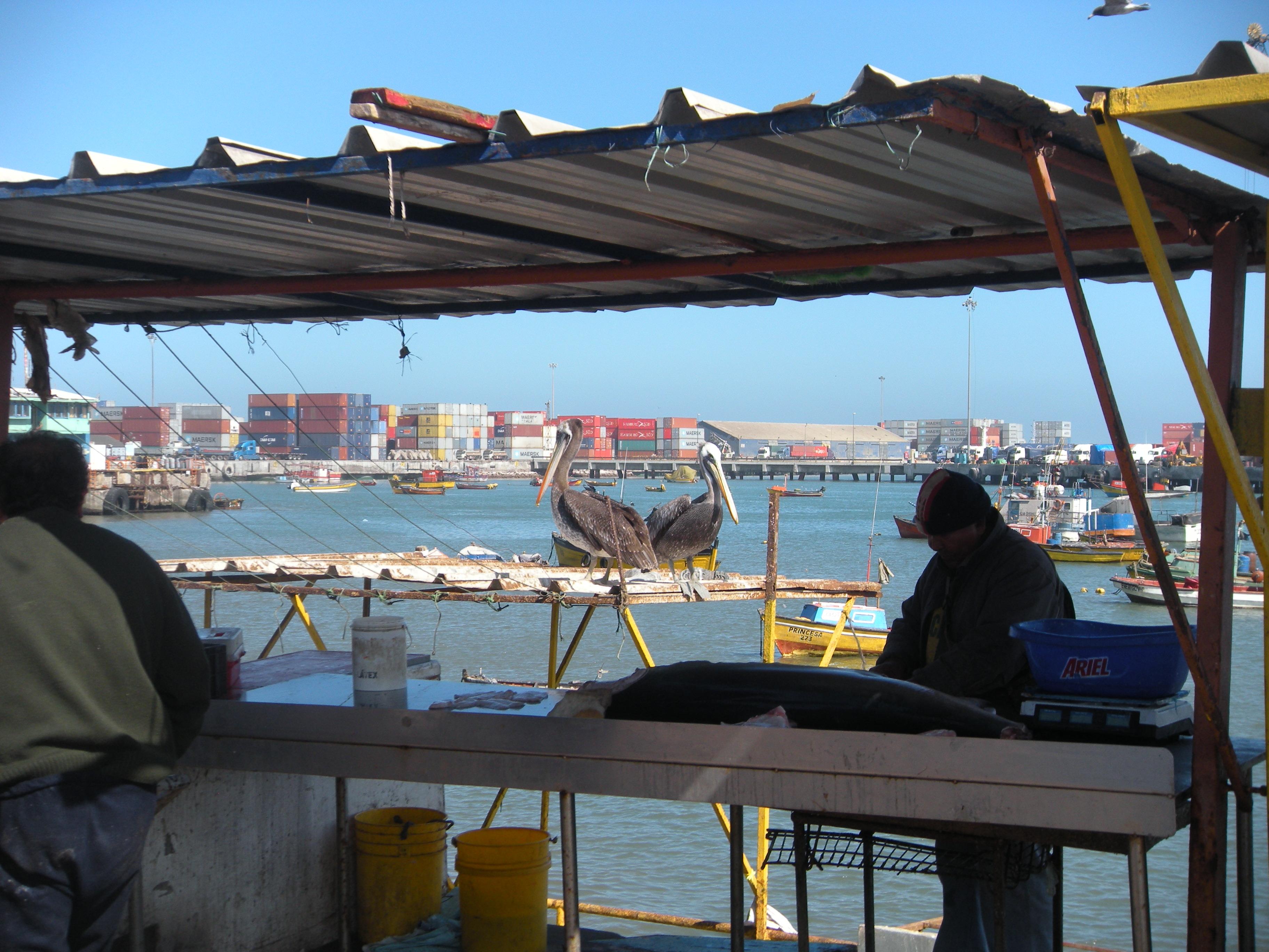 Nel Grande Nord cileno – Viaggio in tre puntate (II)